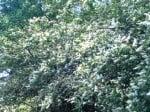 Pollen Count: 10,000